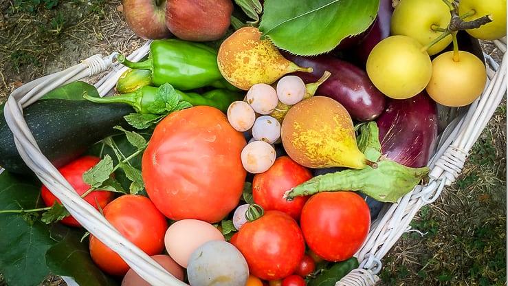 Panier de légumes location de château en Provence